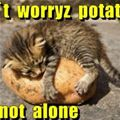 dont worry potato