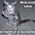 mean drunk kitteh