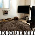 sticked the landing